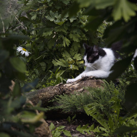 Wild cat